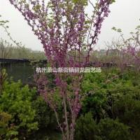 浙江杭州紫荆