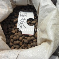 宿迁油茶种子