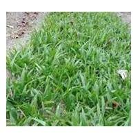 杭州棕竹 细叶棕竹品种齐全