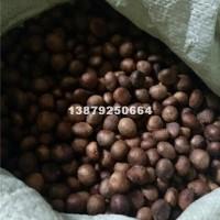 九江枇杷种子最新供应