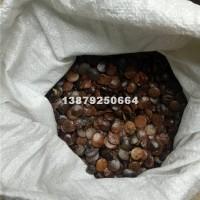 九江紫藤种子最新价格