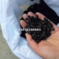 九江山玉兰种子多少钱