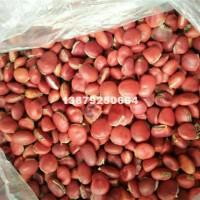 九江鄂西红豆种子价格最优惠