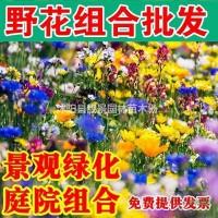 江苏沭阳当年草花种子 野花组合种子 观赏花卉一斤快...