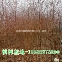 江苏宿迁桃树价格,供桃树2-3-4-5-6公分桃树...