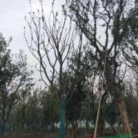 江苏苏州*新榉树信息26都是精品/有需要的老板可以...