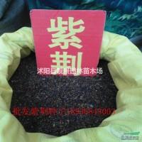 江苏沭阳紫荆种子报价 紫荆种子播种方法 林木种子批...