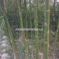 江苏宿迁[杨柳]杨柳_报价表_图片_产地行情-行道...