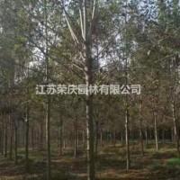 江苏沭阳江苏常年供应规格5公分~14公分白蜡