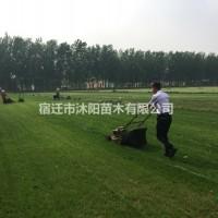 江苏沭阳四季青价格_四季青图片_四季青产地_四季青...