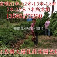 江苏宿迁龙柏基地供应高200-250-300-35...