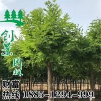 宿迁供应3~15公分优质江南槐价格...