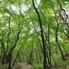 成都黄连木处理成都黄连木促销成都黄连木供应