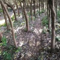 红皮榕树(江西赣州本地榕树),广东棕榈树等。