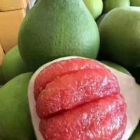 泰国红心青柚苗--平和正达蜜柚诚信商家