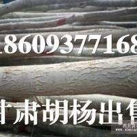 胡杨树苗出售 胡杨树价格 胡杨树多少钱 胡杨树哪里有卖的