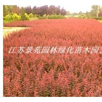 江苏绿庭园林销售红叶小檗,红枫,红花紫薇等工程苗木