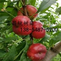 现挖3公分桃树苗 2公分桃树苗 3公分桃树苗价格