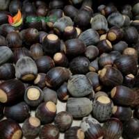 娜塔栎种子供应 优质娜塔栎种子