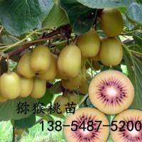 出售猕猴桃苗、软枣猕猴桃苗、红心猕猴桃苗、量大从优