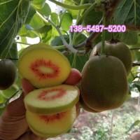 出售猕猴桃小苗 盆栽地载猕猴桃苗 南北方种植猕猴桃