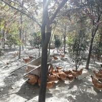 12公分榉树价格 江苏淮安榉树基地