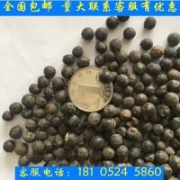 春秋播北京栾树种子优质精选干净饱满发芽率高林木花卉牧草种子