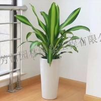 广东广州广州办公室植物租摆盆栽出租养护 绿化工程