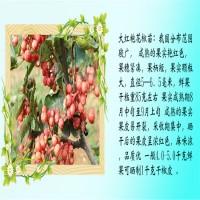 山东泰安有刺花椒苗品种介绍【林泽】80高有刺花椒苗...