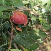 山东泰安黑钻苹果苗施肥时间【多年管理经验】