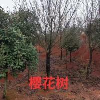 绿化园林乔木优质供应商
