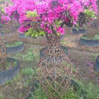 四川成都1.2米高杜鹃花瓶|1.5米杜鹃花瓶价格|...