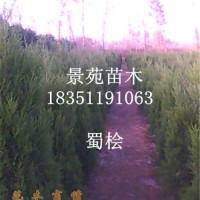 江苏常年销售塔柏,蜀桧,圆柏,塔松工程苗木