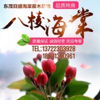 八棱海棠树价格 地径1至30公分八棱海棠 东茂日盛海棠基地