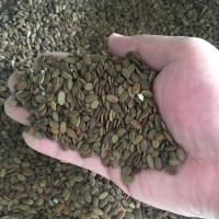 新采合欢树种子价格颜轲种业供应金合欢红花合欢园林绿化工程种子