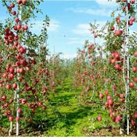 优质果树苗供应
