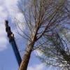 长期供应1—60公分银杏树,美国红枫,法桐,樱花及其各种果树