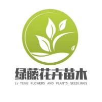西安北海道黄杨供应基地